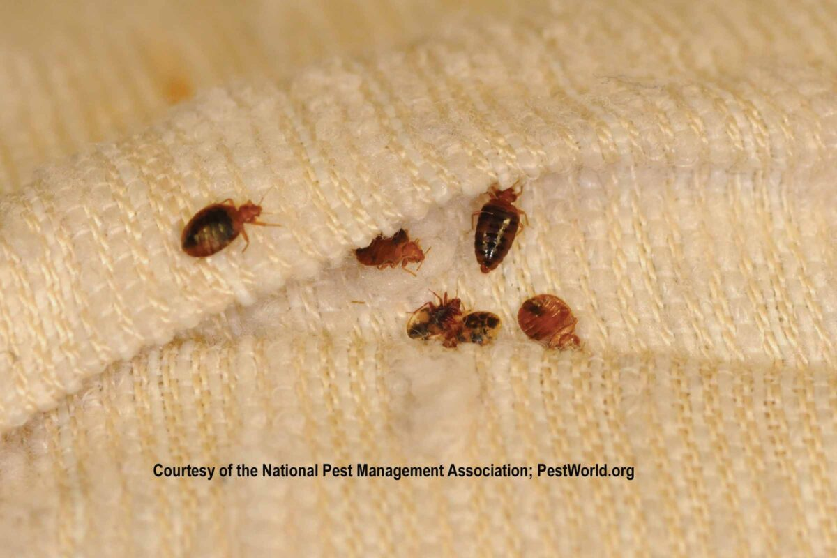 Attractive ... Cold To Kill The Little Biters. More Information Can Be Found At CDC  Website And The National Pest Management Association Website U201cAll Things Bed  Bugs.u201d