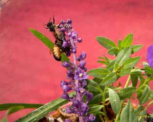 pool 48_Honey Bees