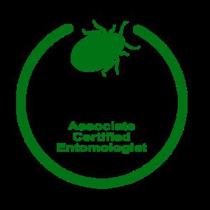 palo verde bug