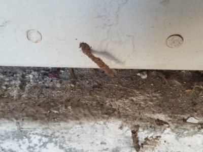 Termite weird tubes