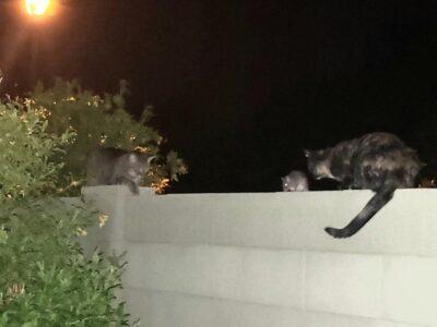 Rats & Cats