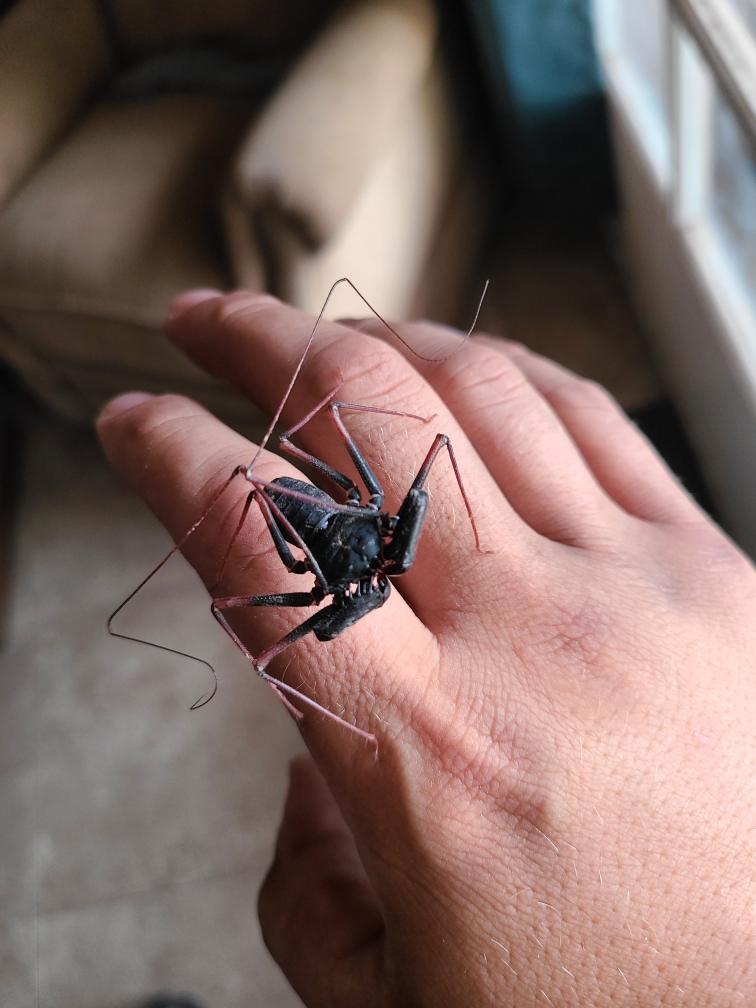 unique bugs