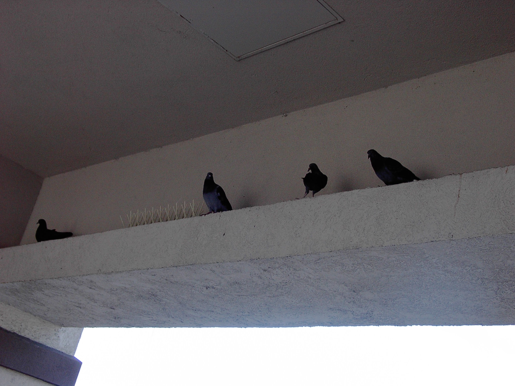 Pigeon ledges